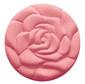 Blossomtime Rose
