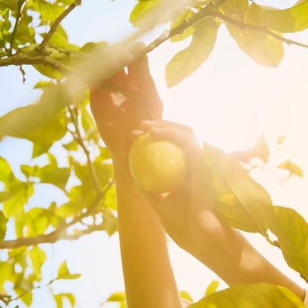 Maison Margiela Replica The Lemon Trees 100 ml