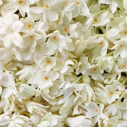 Ralph Lauren Woman Intense Black Eau de Parfum 50 ml