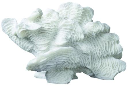 Mette Ditmer Coral Fan Stor Hvid