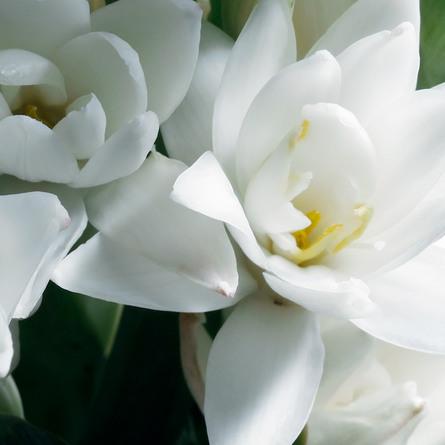 Ralph Lauren Woman Eau de Parfum 50 ml