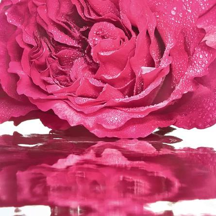 Mon Guerlain The Eau de Toilette Bloom of Rose 50 ml